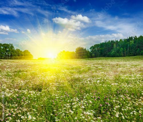 Poster Jaune Summer blooming meadow field
