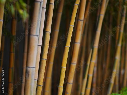 Poster Bamboe bamboo