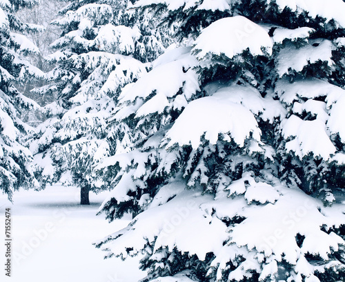 Winter landscape with snow covered trees #71552474