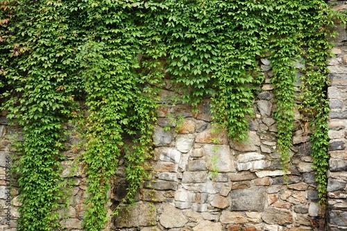 Fototapeta kamień  green-ivy