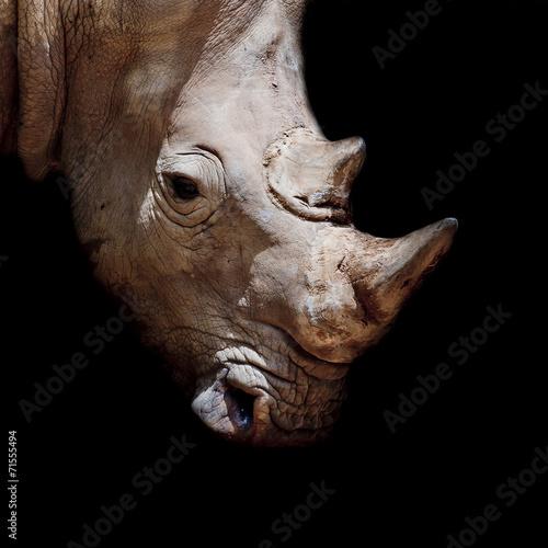 Rhino Black rhinoceros young calf