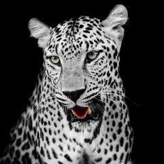Panel Szklany Do sypialni Leopard portrait