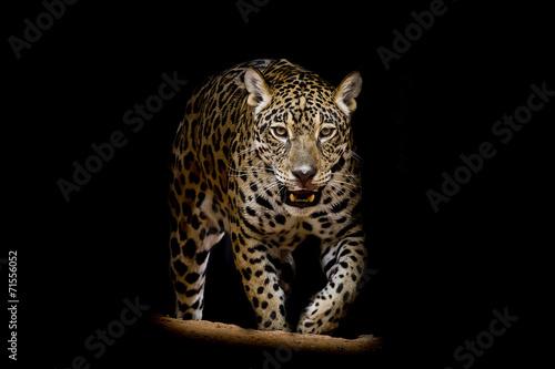 Foto auf Acrylglas Bestsellers Jaguar portrait