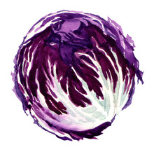 Head Of Red Cabbage Isolated