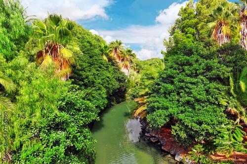 Fotografía  Beautiful landscape of humid tropical jungle.