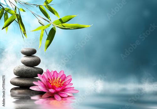 waterlily with stones and bamboo Canvas Print