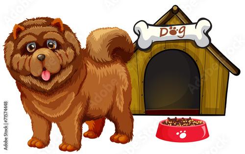 Fototapety, obrazy: Dog