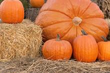 Pumpkin Family Portrait