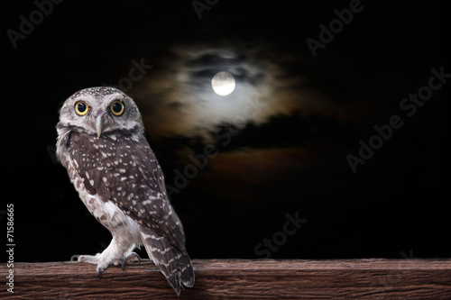 Staande foto Uil Owl and full moon.