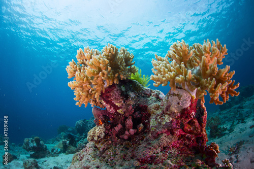 Canvas Prints Under water Indonesia