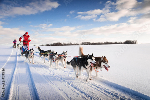 Poster Glisse hiver Woman musher hiding behind sleigh at sled dog race on snow in wi
