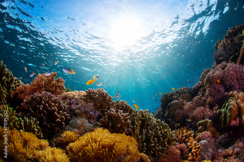 Photo Stands Coral reefs Indonesia