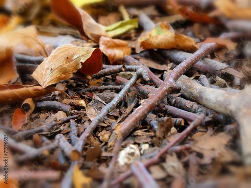 Fotografia autumn mess background