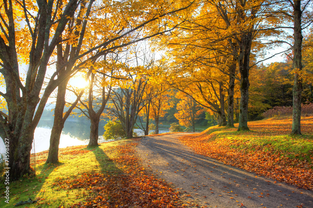 foto auf acrylglas lake pathway with yellow leaves nikkel. Black Bedroom Furniture Sets. Home Design Ideas