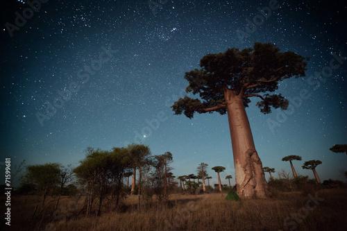 Poster Baobab Madagascar