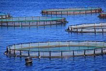 Fischzucht Auf Korfu Griechenl...
