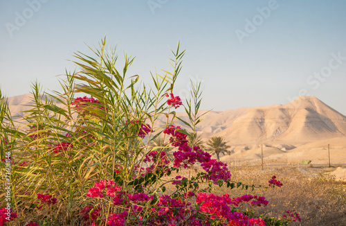 Poster Moyen-Orient Bougainvillea on background of Judean Mountains in Israel
