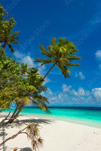 Poster Strand Rest in Paradise - Malediven - Palmenstrand, Himmel und Meer