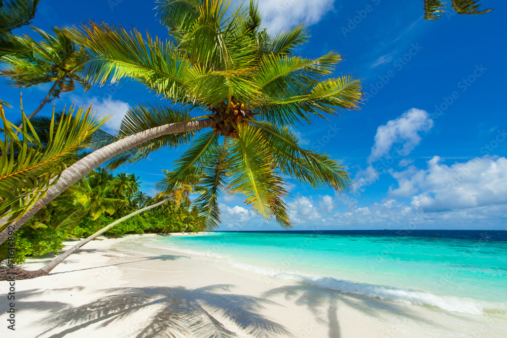 Fototapeta Rest in Paradise - Malediven - Palmenstrand, Himmel und Meer
