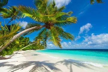 FototapetaRest in Paradise - Malediven - Palmenstrand, Himmel und Meer