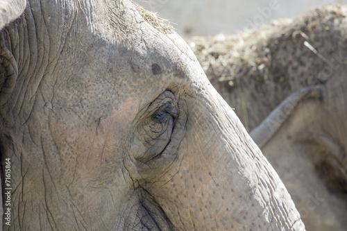 Valokuva  Elefante