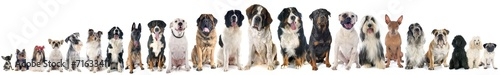 In de dag Hond group of dogs