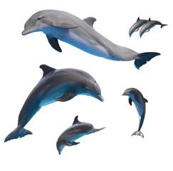 Fototapetajumping dolphins on white