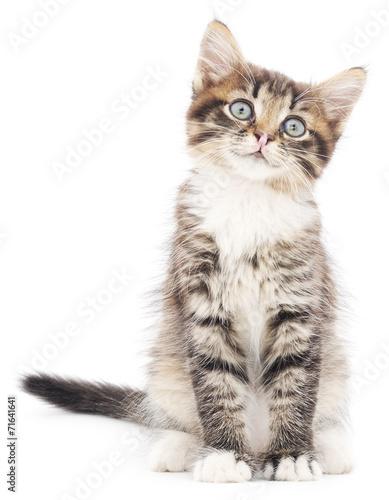 Fotobehang Kat Kitten on a white background