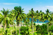 Beautiful Grove Exotic Paradise