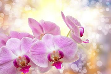 Fototapeta kwiat orchidei