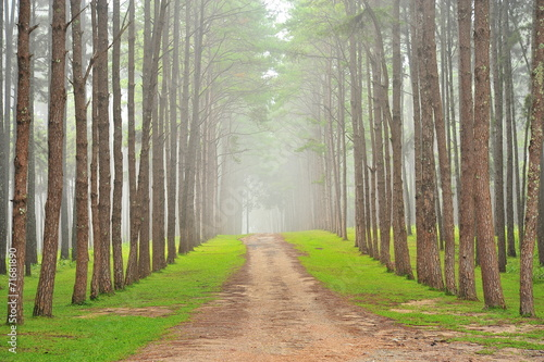 Foto op Canvas Weg in bos Autumn Pine Forests
