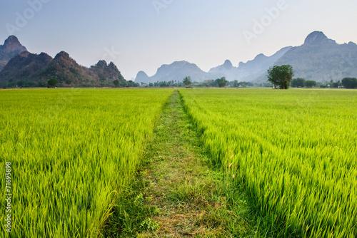 Printed kitchen splashbacks Khaki Path leads into rice paddy