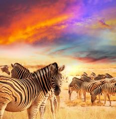 fototapeta zebry abstrakcja