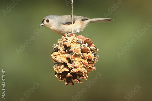 Aufkleber - Bird On A Suet Feeder