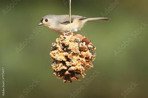 Sticker - Bird On A Suet Feeder