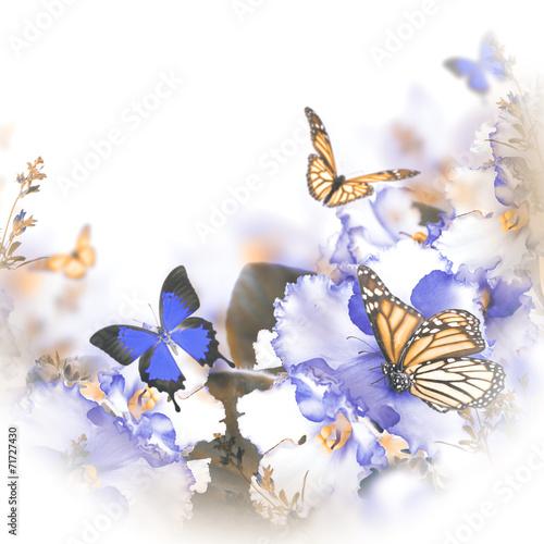 niesamowity-bukiet-wiosennych-fiolkow-i-motyli