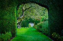 Green Plant Arches In English ...