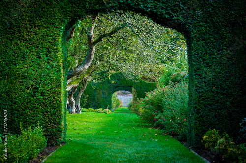 Fototapeta Green plant arches in english countryside garden obraz