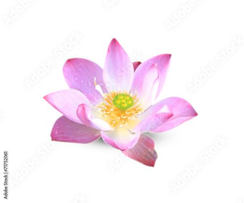 Lotus Flower © scenery1
