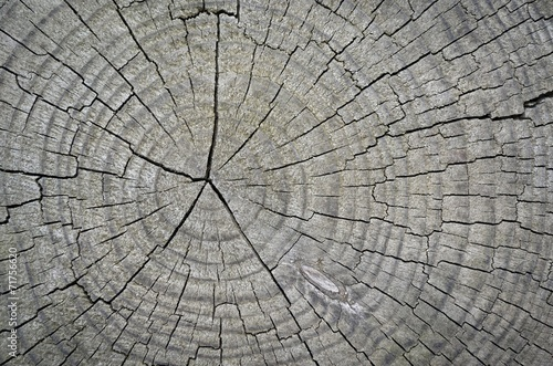 Fotografie, Obraz  Cross section of tree trunk showing growth rings,texture
