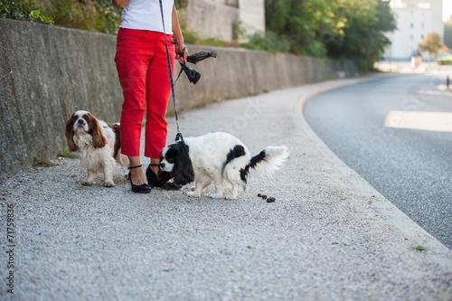 Foto Déjection canine