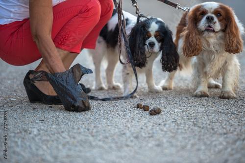 Fotografía  Ramasser  déjection canine