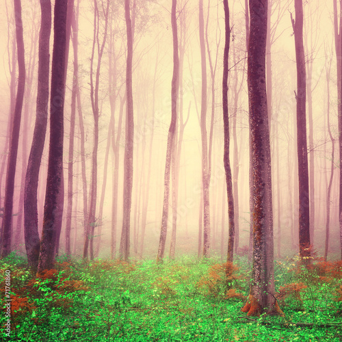 Fototapeta Purple light forest scene