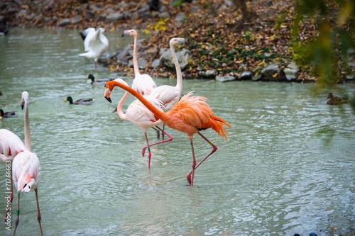Photo Stands Flamingo Flamingo