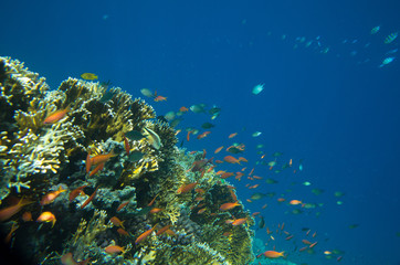 Fototapeta na wymiar Coral Sea