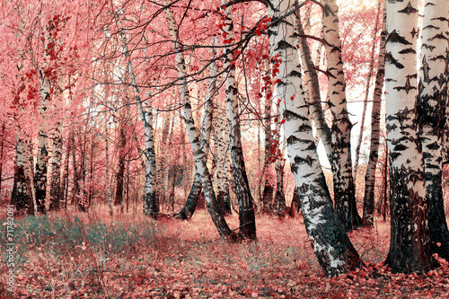Cadres-photo bureau Bosquet de bouleaux pink birch grove
