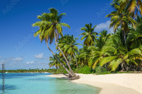 Fotografie, Tablou Exotic coast of the Dominican Republic with exotic palm trees