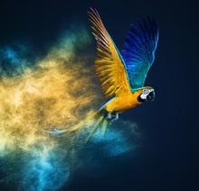 Flying Ara Parrot Over Colourf...