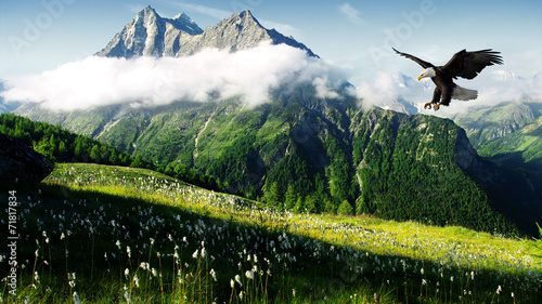 Cadres-photo bureau Aigle hunting eagle