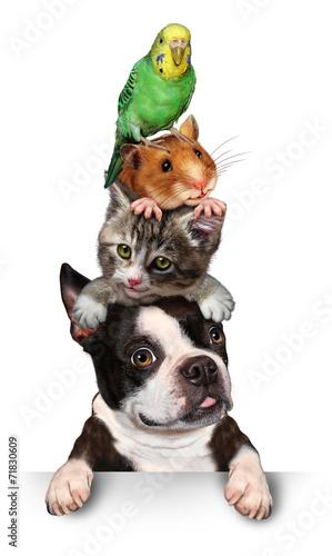 Fotografía  Group Of Pets